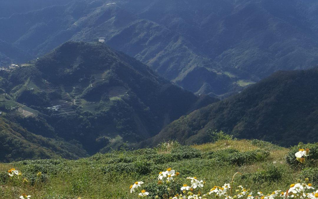 "Tea, Terroir and Taste: Discovering a ""Sense of Place"""